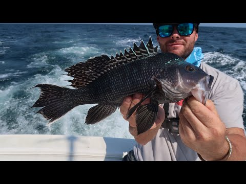 CATCHING SEA BASS OFF THE NEW JERSEY SHORE!