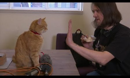 AP: World's most famous street cat returns to the screen