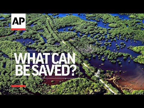 AP: Episode 12 – Everglades Evolution | What Can Be Saved? | AP