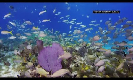 AP: Officials want $100M for reef restoration