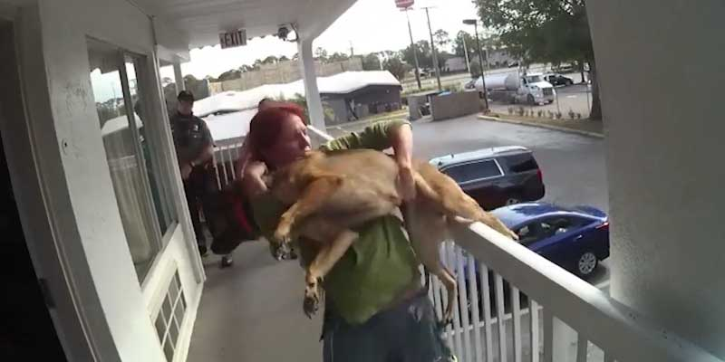 'Miracle' the German shepherd survives being thrown off motel balcony by owner
